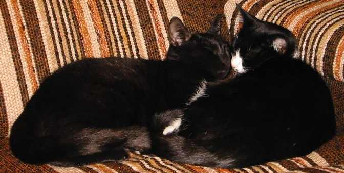Cathug cat hug image cats community forum wiki images photo photos photo-album upload photo-albums